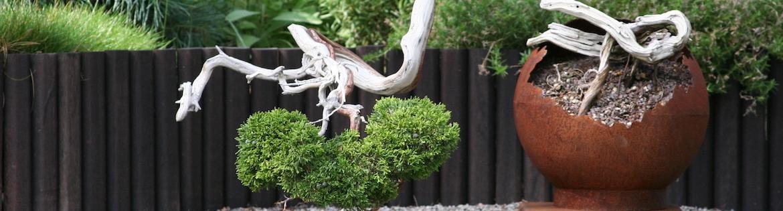 bonsai zone